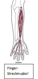 Es ist nach der Zeit wieviel nimmt die Behandlung gribka der Nägel ein